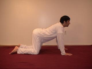 Beginner's yoga poses